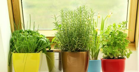 A collection of herbs in colorful pots thrive in a sunny window